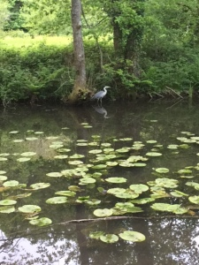 A heron, free to spend his days however he wants.